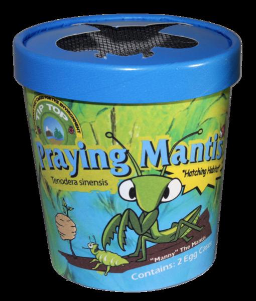 Praying Mantis Eggs Urban Roots